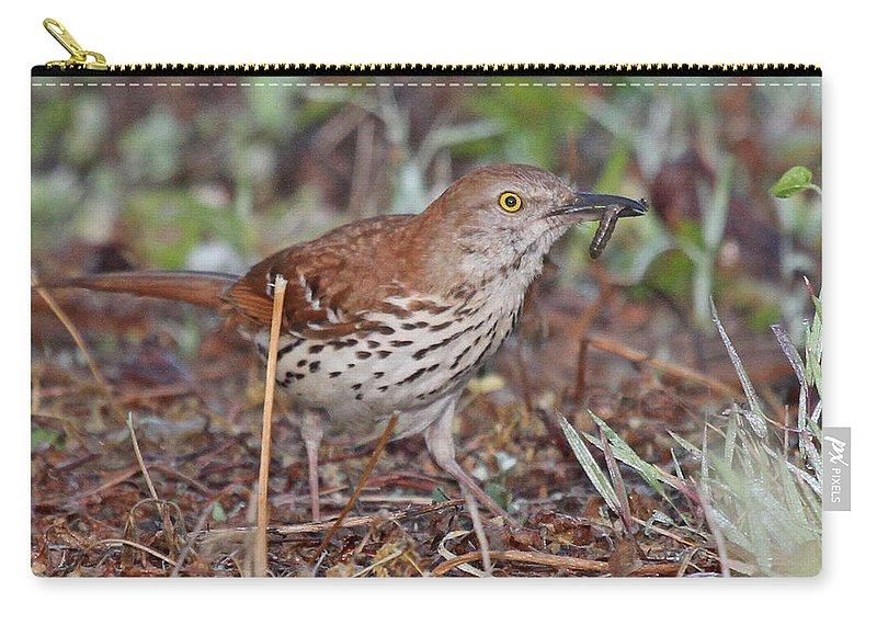 Nature Carry-all Pouch featuring the photograph Brown Thrasher by Mike Dickie