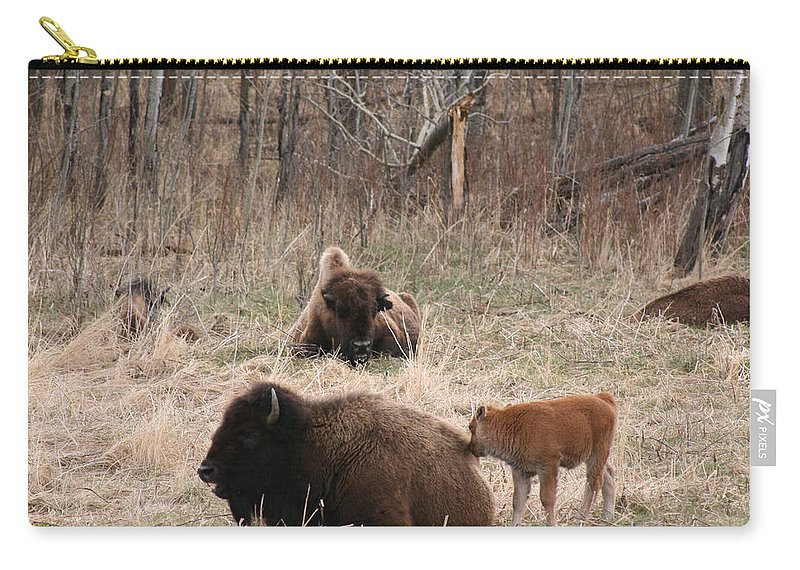 Bison Buffalo Calf Baby Animals Nature Love Native Carry-all Pouch featuring the photograph Buffalo And Calf by Andrea Lawrence