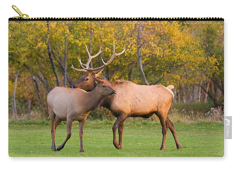 Autumn Carry-all Pouch featuring the photograph Bull And Cow Elk - Rutting Season by James BO Insogna