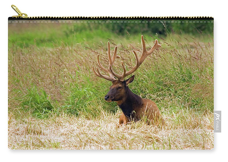 Bull Elk Carry-all Pouch featuring the photograph Bull Elk At Rest by Randall Ingalls