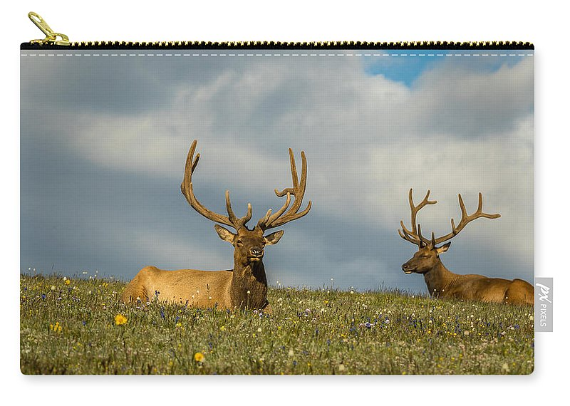 Cervus Canadensis Carry-all Pouch featuring the photograph Bull Elk Friends For Now by Vicki Stansbury