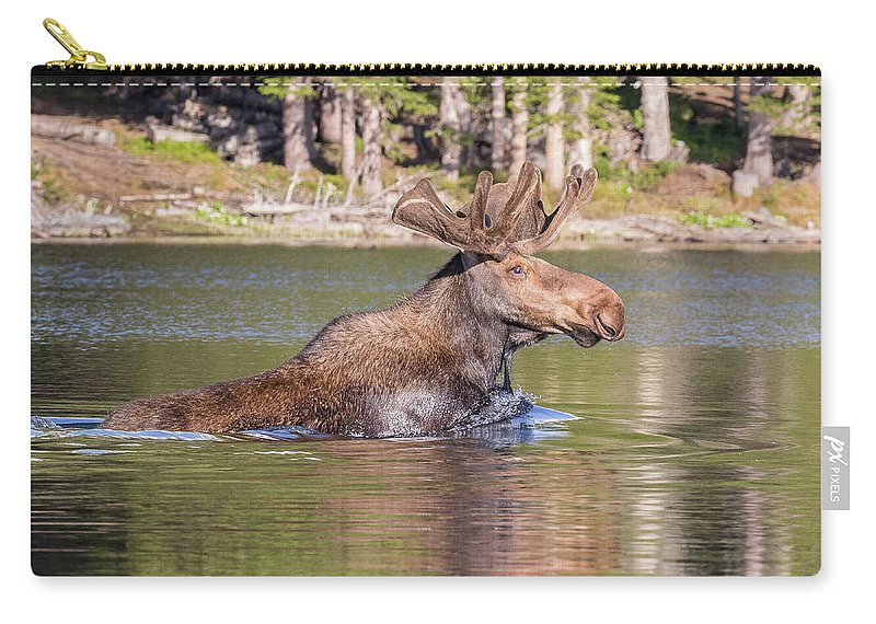 Moose Carry-all Pouch featuring the photograph Bull Moose Goes For A Swim by Tony Hake