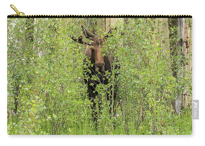 Moose Carry-all Pouch featuring the photograph Bull Moose Guards The Aspen by Tony Hake