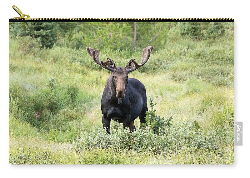 Moose Carry-all Pouch featuring the photograph Bull Moose Stands Guard by Tony Hake
