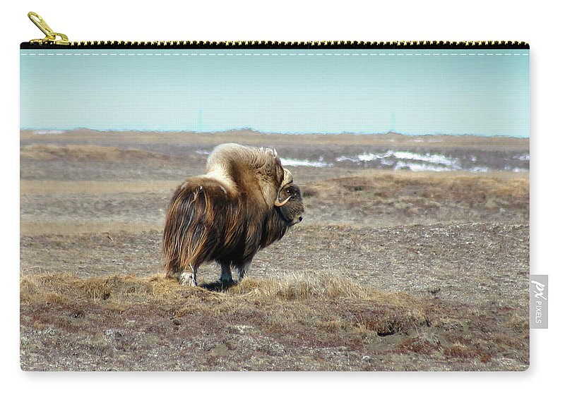 Bull Carry-all Pouch featuring the photograph Bull Musk Ox by Anthony Jones
