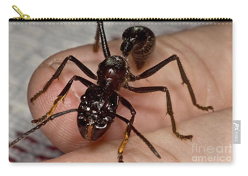 Bullet Ant Carry-all Pouch featuring the photograph Bullet Ant On Hand by Dant� Fenolio