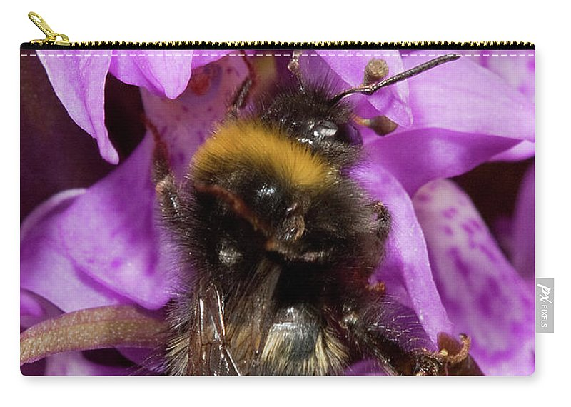 Plants Carry-all Pouch featuring the photograph Bumblebee On Orchid by Bob Kemp