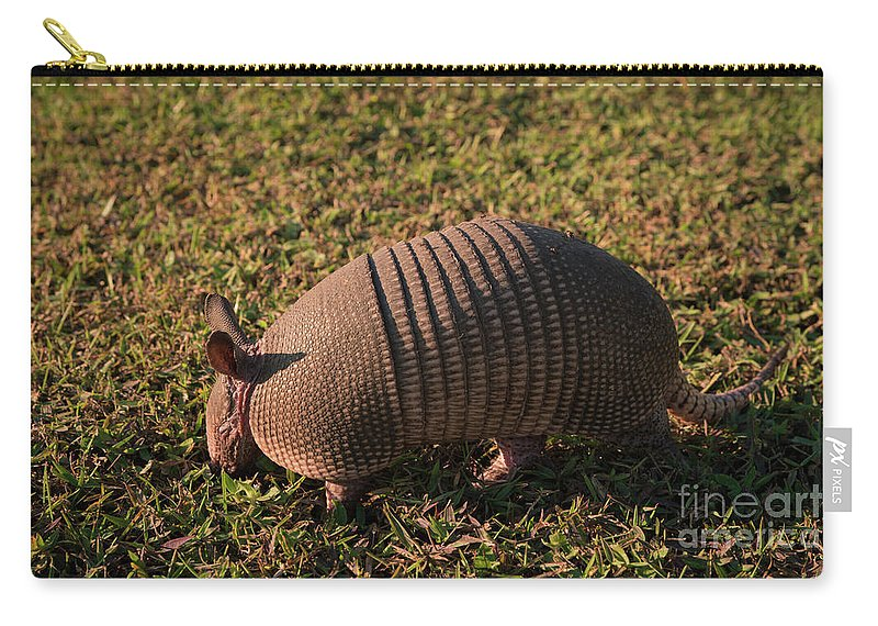 Armadillo Carry-all Pouch featuring the photograph Busy Armadillo by Zina Stromberg