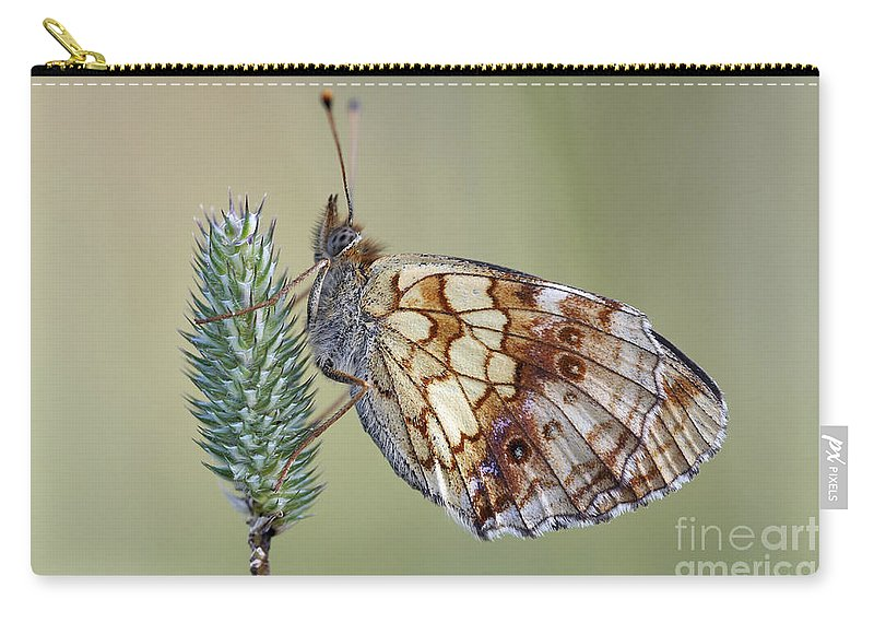 Macro Carry-all Pouch featuring the photograph Butterfly - Meadow Satyrid by Michal Boubin
