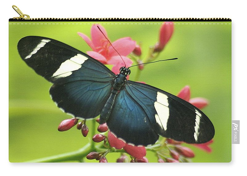Butterfly Carry-all Pouch featuring the photograph butterfly in Square by Michael Peychich