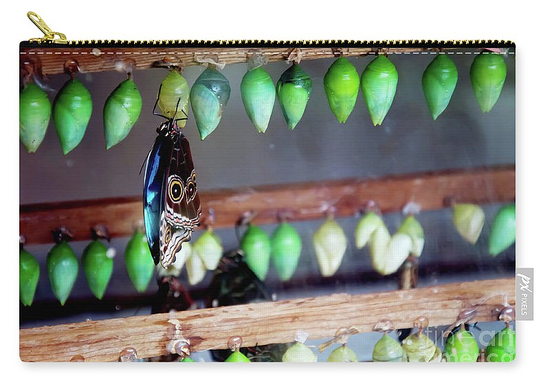Butterfly Chrysalis Carry-all Pouch featuring the photograph Butterfly With Butterfly Chrysalis 1 by Andee Design