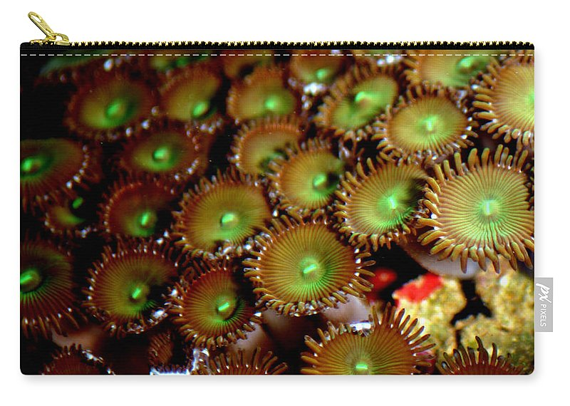 Underwater Carry-all Pouch featuring the photograph Button Polyps by Anthony Jones