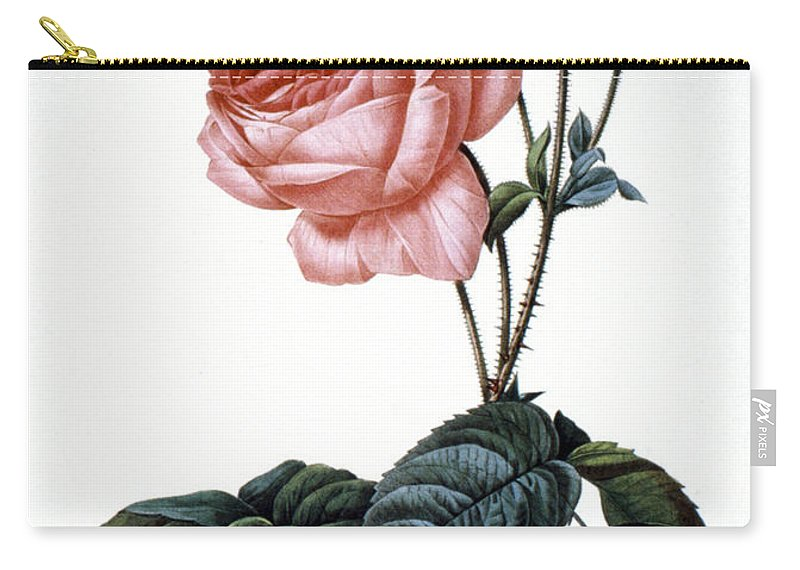 1833 Carry-all Pouch featuring the photograph Cabbage Rose by Granger