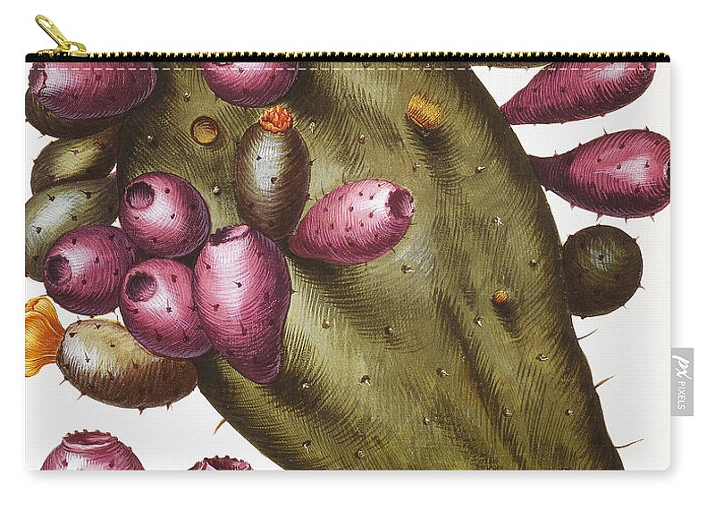1613 Carry-all Pouch featuring the photograph Cactus: Opuntia, 1613 by Granger