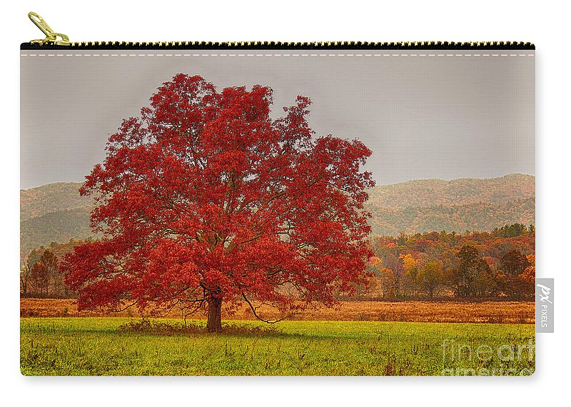 Cades Cove Carry-all Pouch featuring the photograph Cades Tree After The Rain by Geraldine DeBoer