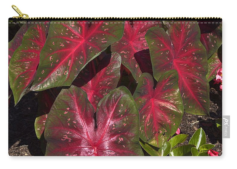 Caladiums Carry-all Pouch featuring the photograph Caladiums by Sally Weigand