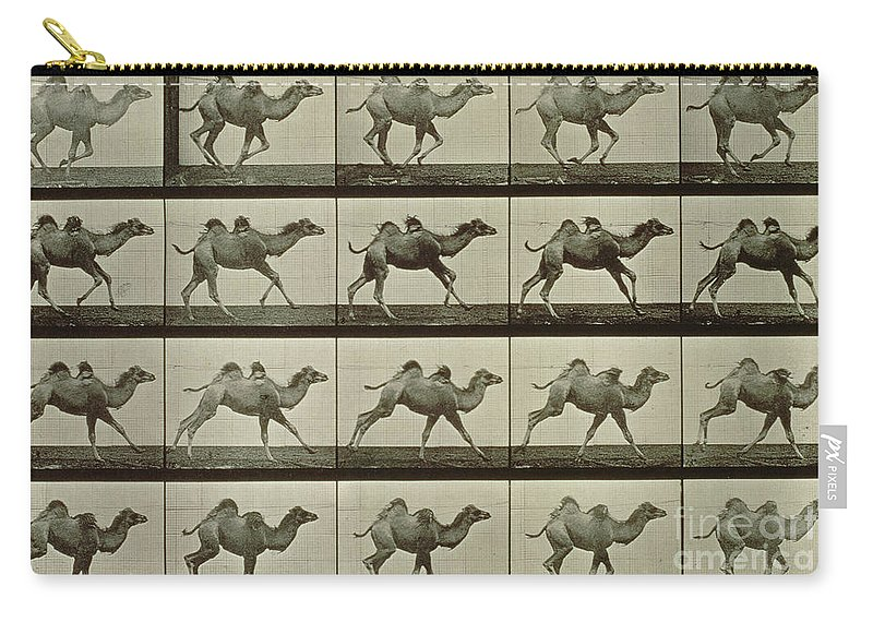 Muybridge Carry-all Pouch featuring the photograph Camel by Eadweard Muybridge