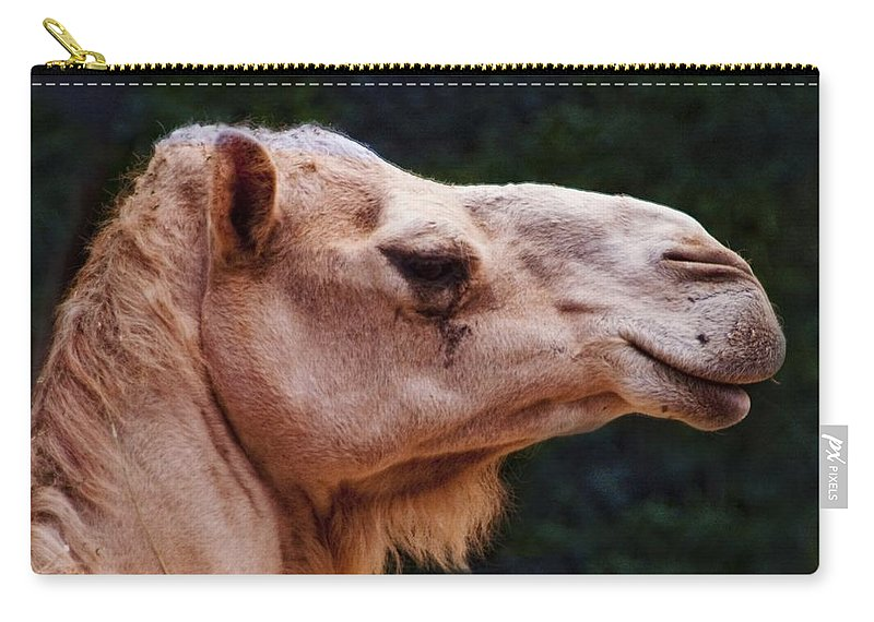 Camel Carry-all Pouch featuring the photograph Camel by Steven Natanson