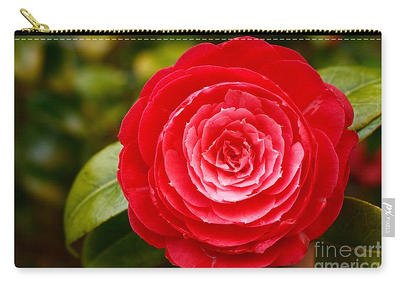 Azores Carry-all Pouch featuring the photograph Camellia Japonica by Gaspar Avila