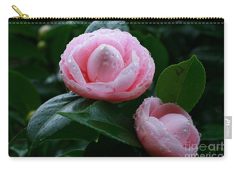 Bloom Carry-all Pouch featuring the photograph Camellias by Gaspar Avila
