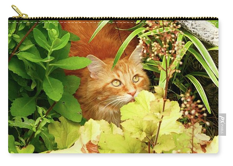 Maine Coon / Red Tabby Carry-all Pouch featuring the photograph Can You See Me Now? by Gregory E Dean