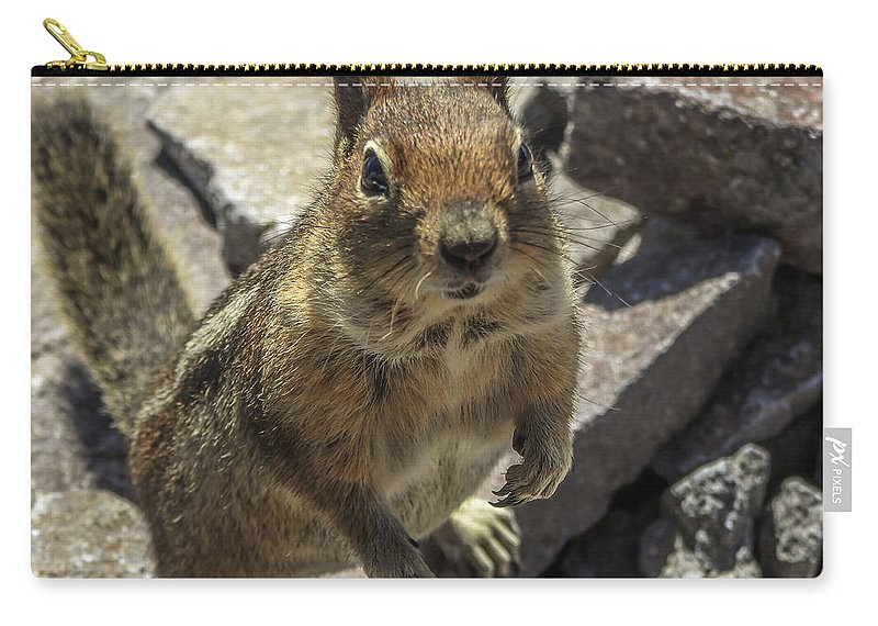 Squirrel Carry-all Pouch featuring the photograph Can You Spare Me Some Food? by Tony Porter Photography