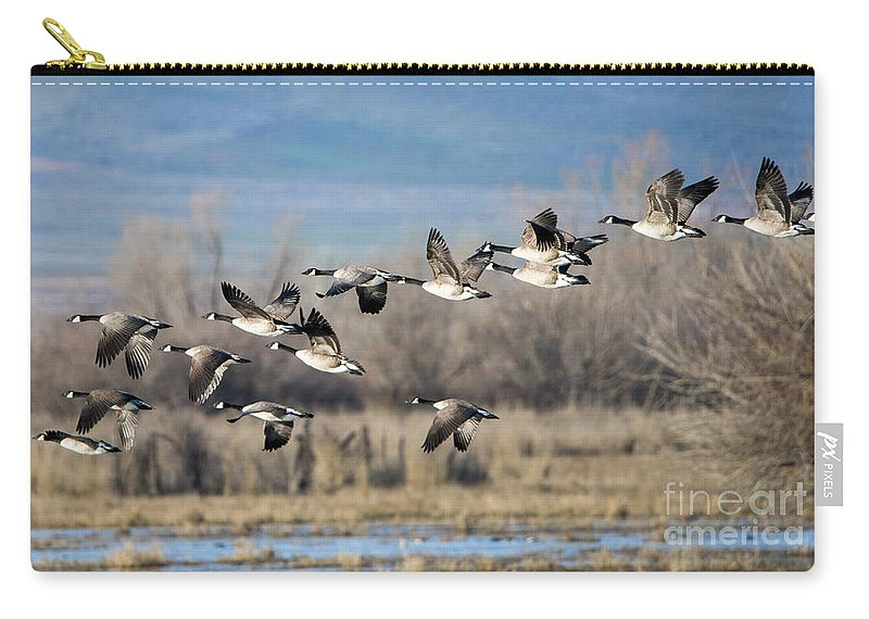 Canada Geese. Geese Carry-all Pouch featuring the photograph Canada Geese Flock by Mike Dawson