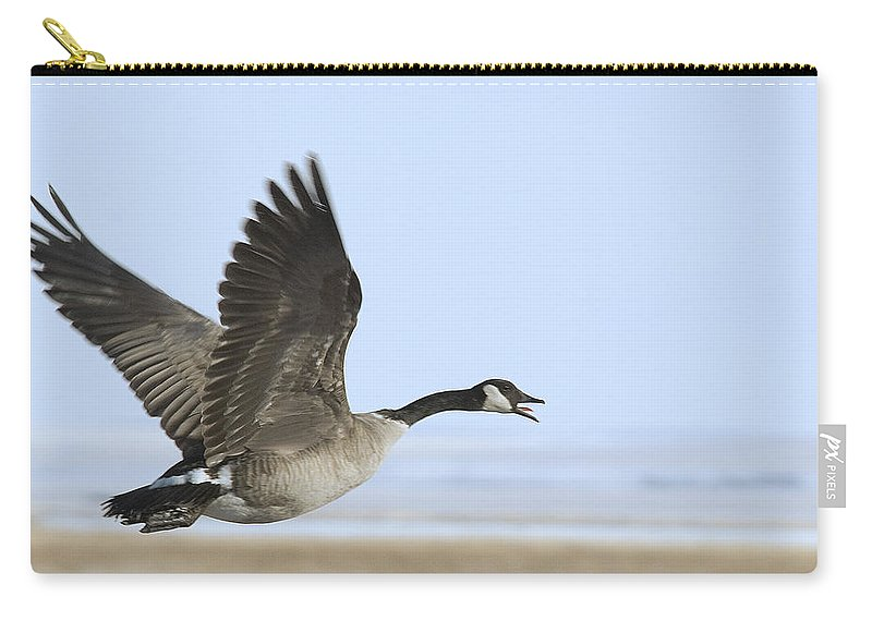 Goose Carry-all Pouch featuring the photograph Canada Goose by Gary Beeler