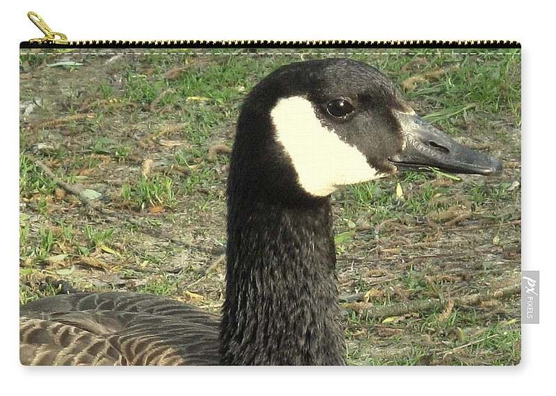 Canada Carry-all Pouch featuring the photograph Canada Goose by Ian MacDonald
