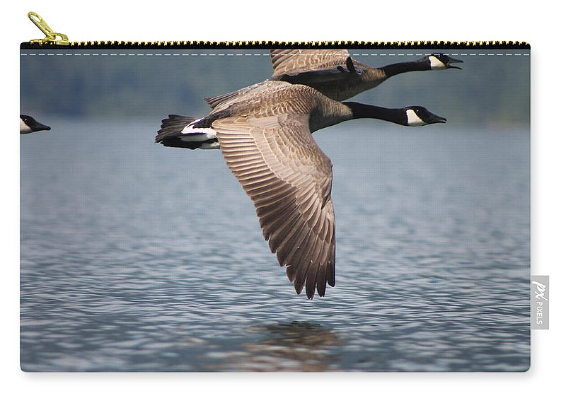 Canada Goose Carry-all Pouch featuring the photograph Canada's Goose by Cathie Douglas