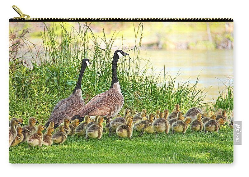 Canada Goose Carry-all Pouch featuring the photograph Canadian Geese Family by Jennie Marie Schell