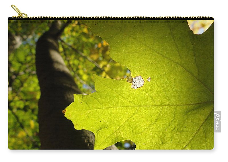 Leaves Carry-all Pouch featuring the photograph Canopy View by Trish Hale