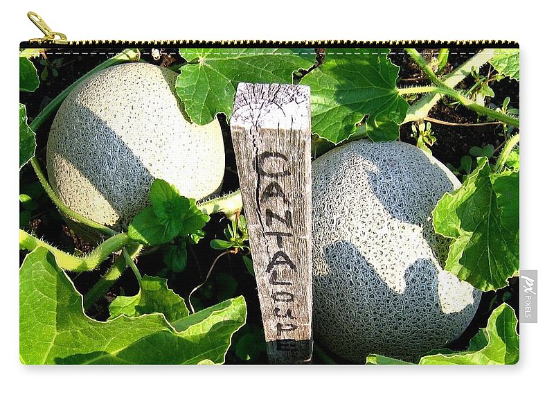 Cantaloupe Carry-all Pouch featuring the photograph Cantaloupe by Will Borden
