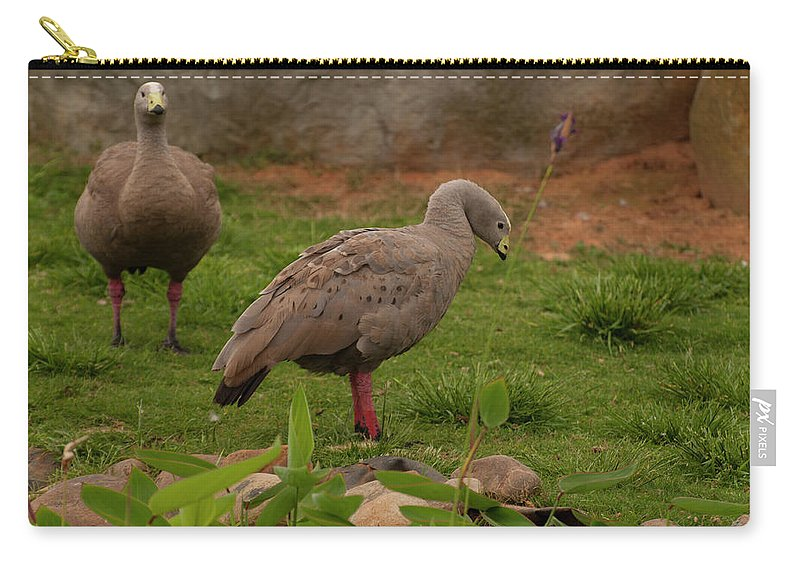 Cape Barren Goose Carry-all Pouch featuring the photograph Cape Barren Geese Facing Right by Chris Flees