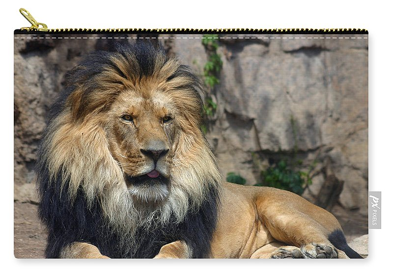Lion Carry-all Pouch featuring the photograph Captive Pride by Anthony Jones