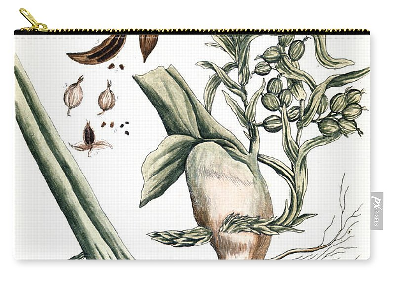1730s Carry-all Pouch featuring the photograph Cardamom, 1735 by Granger