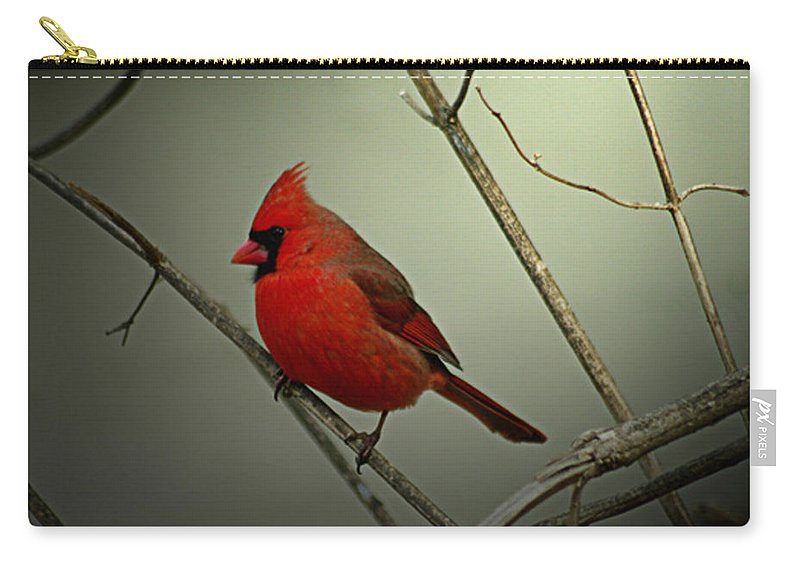 Jenny Gandert Carry-all Pouch featuring the photograph Cardinal And The Setting Sun by Jenny Gandert