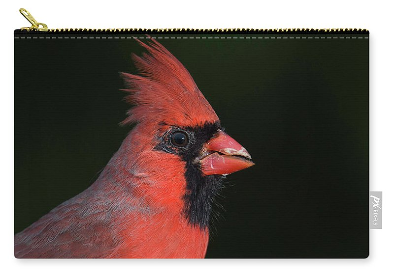 Cardinal Carry-all Pouch featuring the photograph Cardinal Portrait by Phil Thach