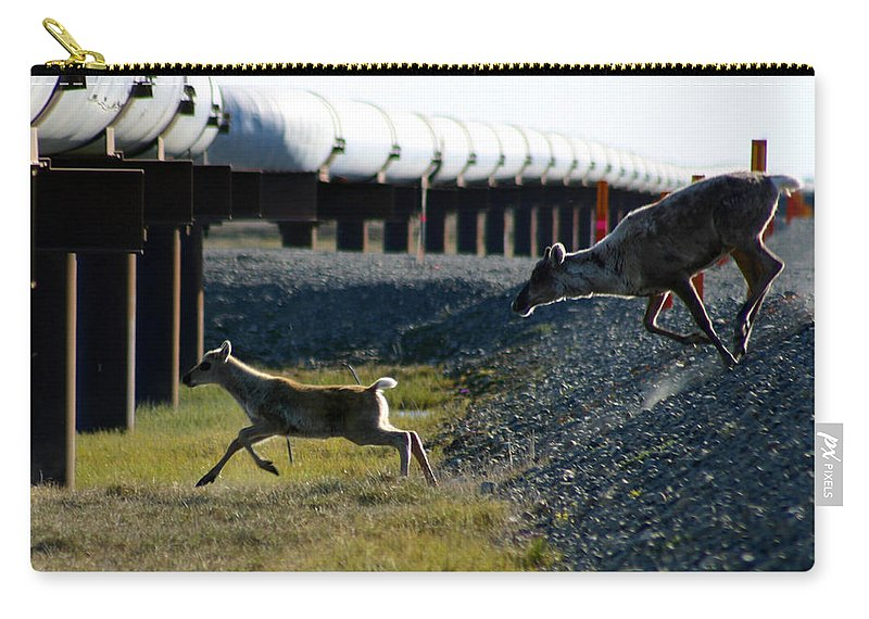 Caribou Carry-all Pouch featuring the photograph Caribou Cow And Fawn by Anthony Jones