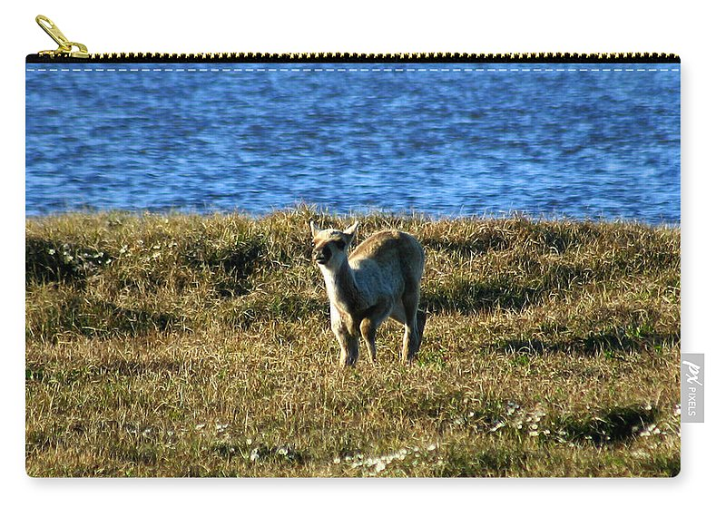 Fawn Carry-all Pouch featuring the photograph Caribou Fawn by Anthony Jones