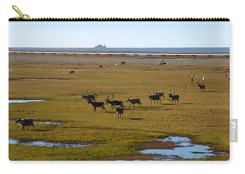 Caribou Carry-all Pouch featuring the photograph Caribou Herd by Anthony Jones