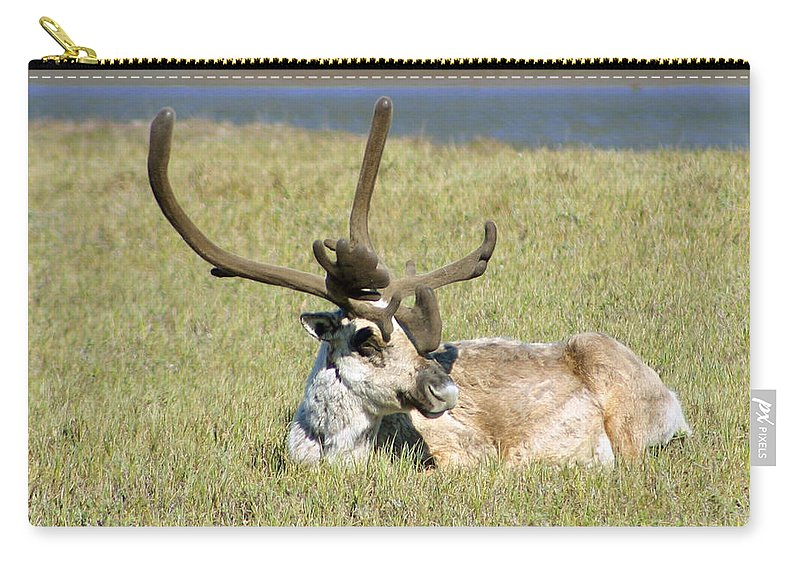 Caribou Carry-all Pouch featuring the photograph Caribou Rest by Anthony Jones