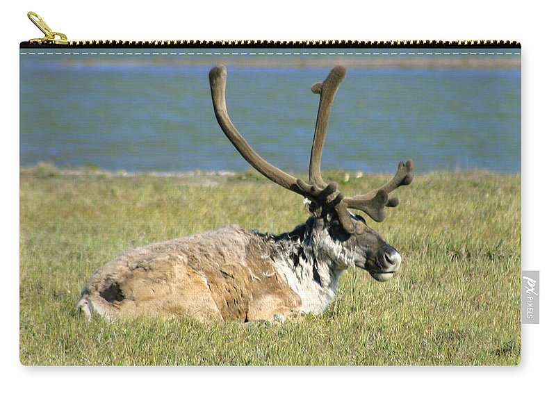 Caribou Carry-all Pouch featuring the photograph Caribou Resting by Anthony Jones