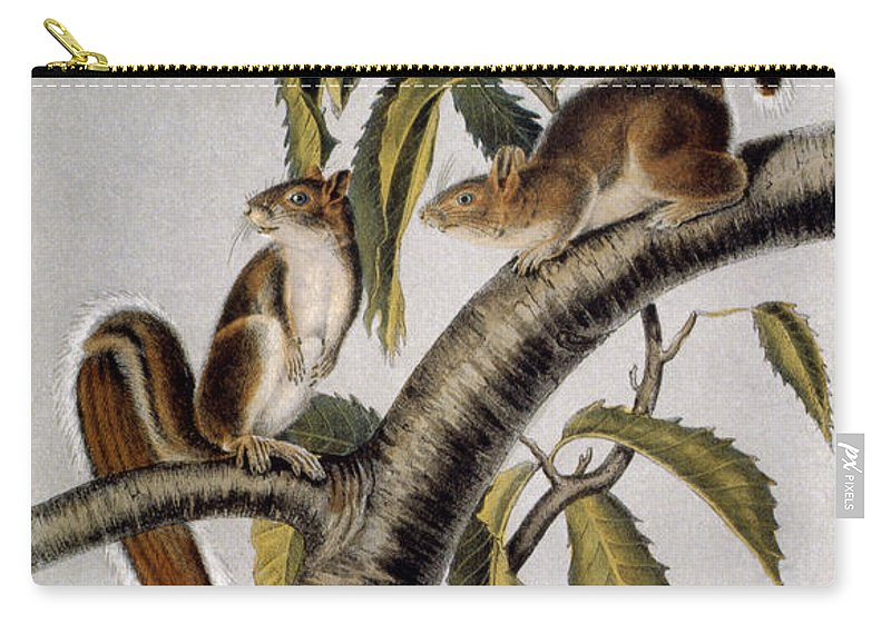 1846 Carry-all Pouch featuring the photograph Carolina Grey Squirrel by Granger
