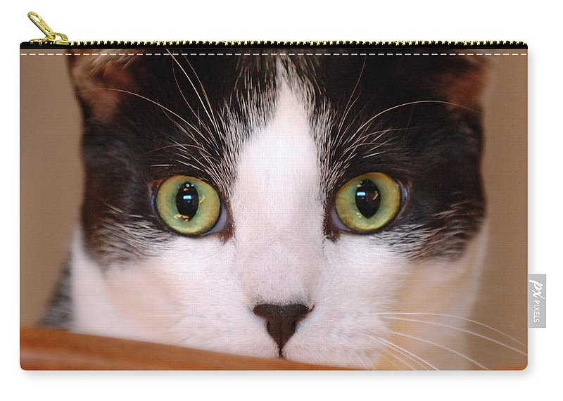 Pet Carry-all Pouch featuring the photograph Cat Eyes by Jill Reger