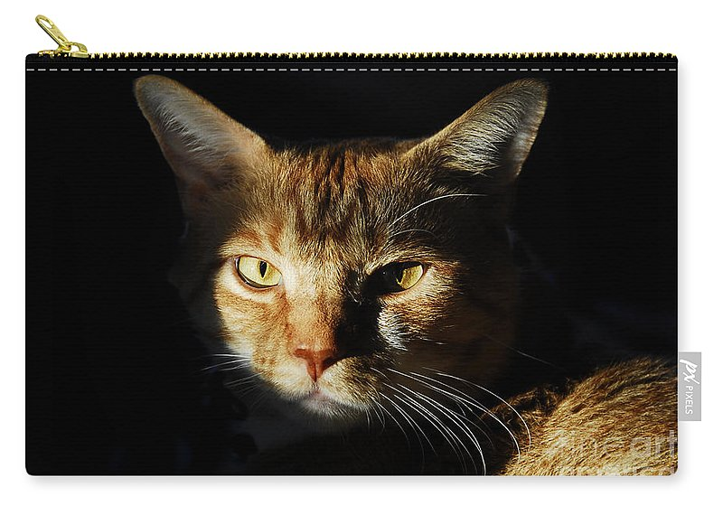 Cat Carry-all Pouch featuring the photograph Cat In Shadow by David Lee Thompson
