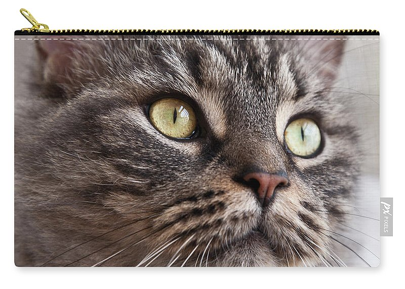 Nature Carry-all Pouch featuring the photograph Cat Of Nicole 4 by Heiko Koehrer-Wagner