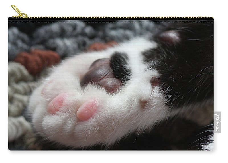 Cat Carry-all Pouch featuring the photograph Cats Paw by Kim Henderson