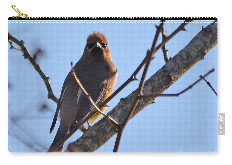 Lake Carry-all Pouch featuring the photograph Cedar Wax Wing On The Lookout by Barb Dalton
