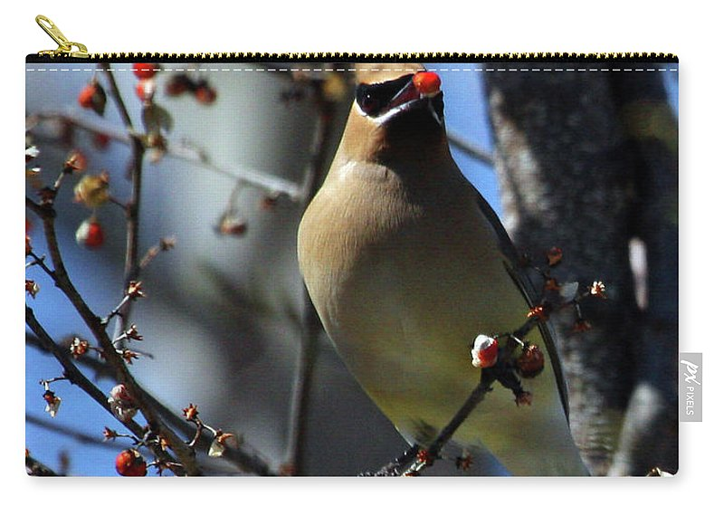 Bird Carry-all Pouch featuring the photograph Cedar Waxwing by Karol Livote
